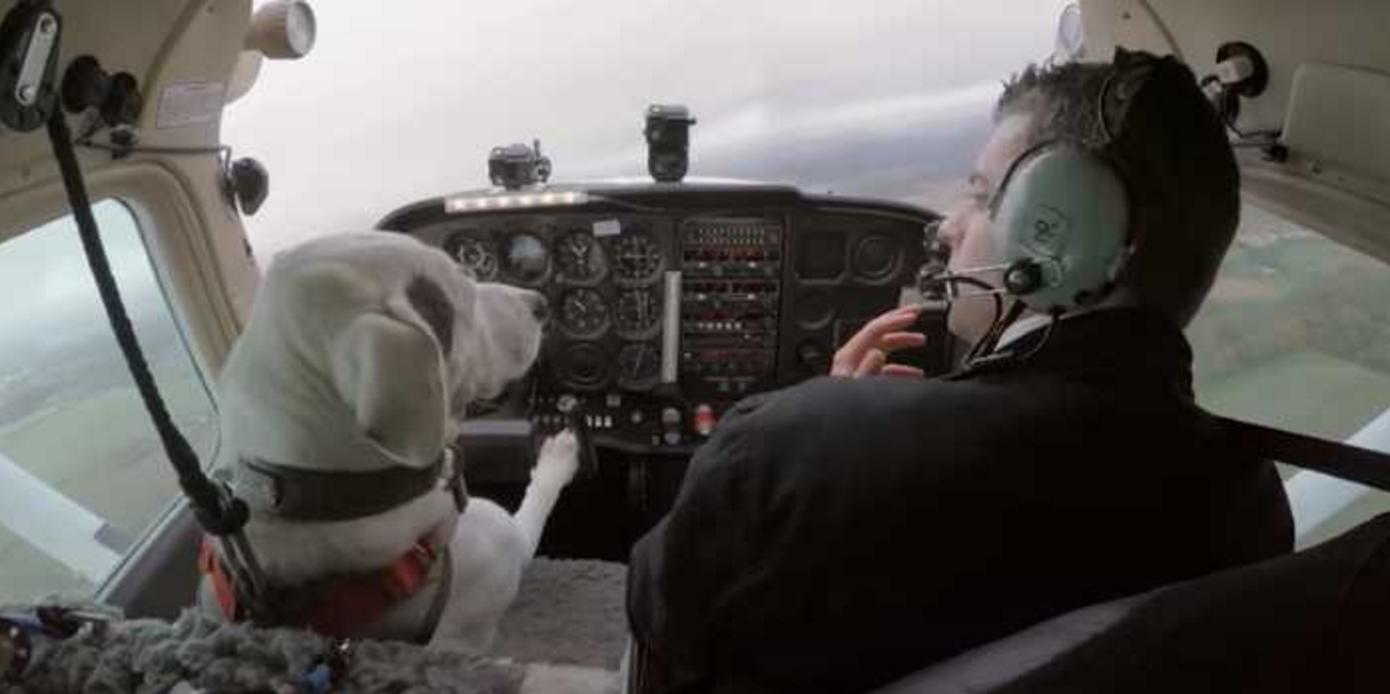 犬に飛行機の操縦を教え込んだ結果!?まさかの上空で緊急事態が発生….