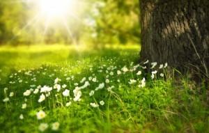 spring-276014_1920-480x305