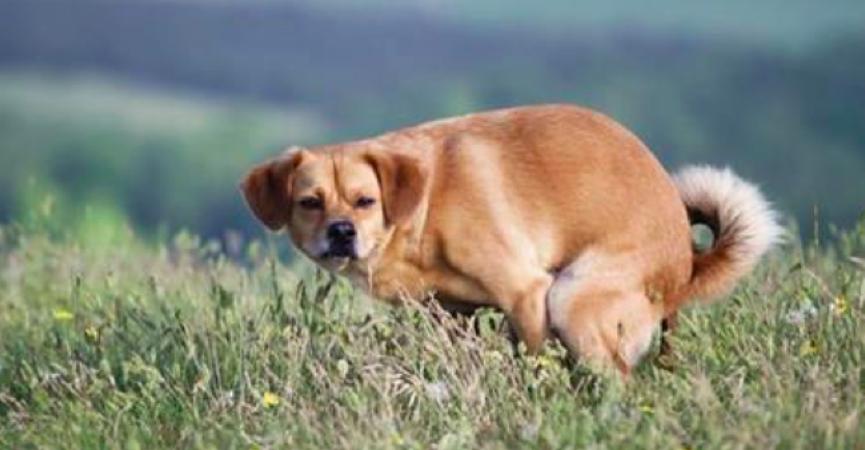 犬がうんちする時、アナタを見つめてませんか?その意外すぎる理由とは
