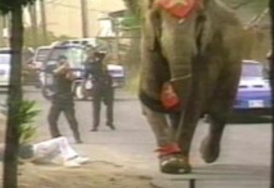 【闇】悪気は無かった。。調教師を踏み殺し86発の銃弾を浴びて殺されたゾウ。その最後の姿に胸が張り裂けそうになる。。。