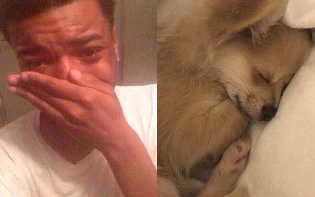 【衝撃】あなたの愛犬は眠っているとき、どんな夢を見ている?大学教授の研究結果に全米が涙した!