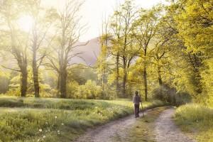 path-1577192_960_720