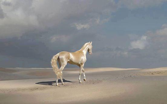 世界で最も美しいとされる馬。専門家はその毛を分析し、驚愕した。
