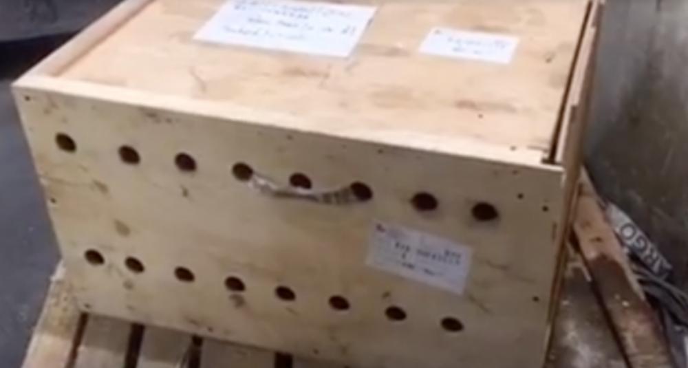 【※衝撃】空港で放置されたまま一週間が放置した箱。開封して中に入っているものを見た職員たちは戦慄した・・・。