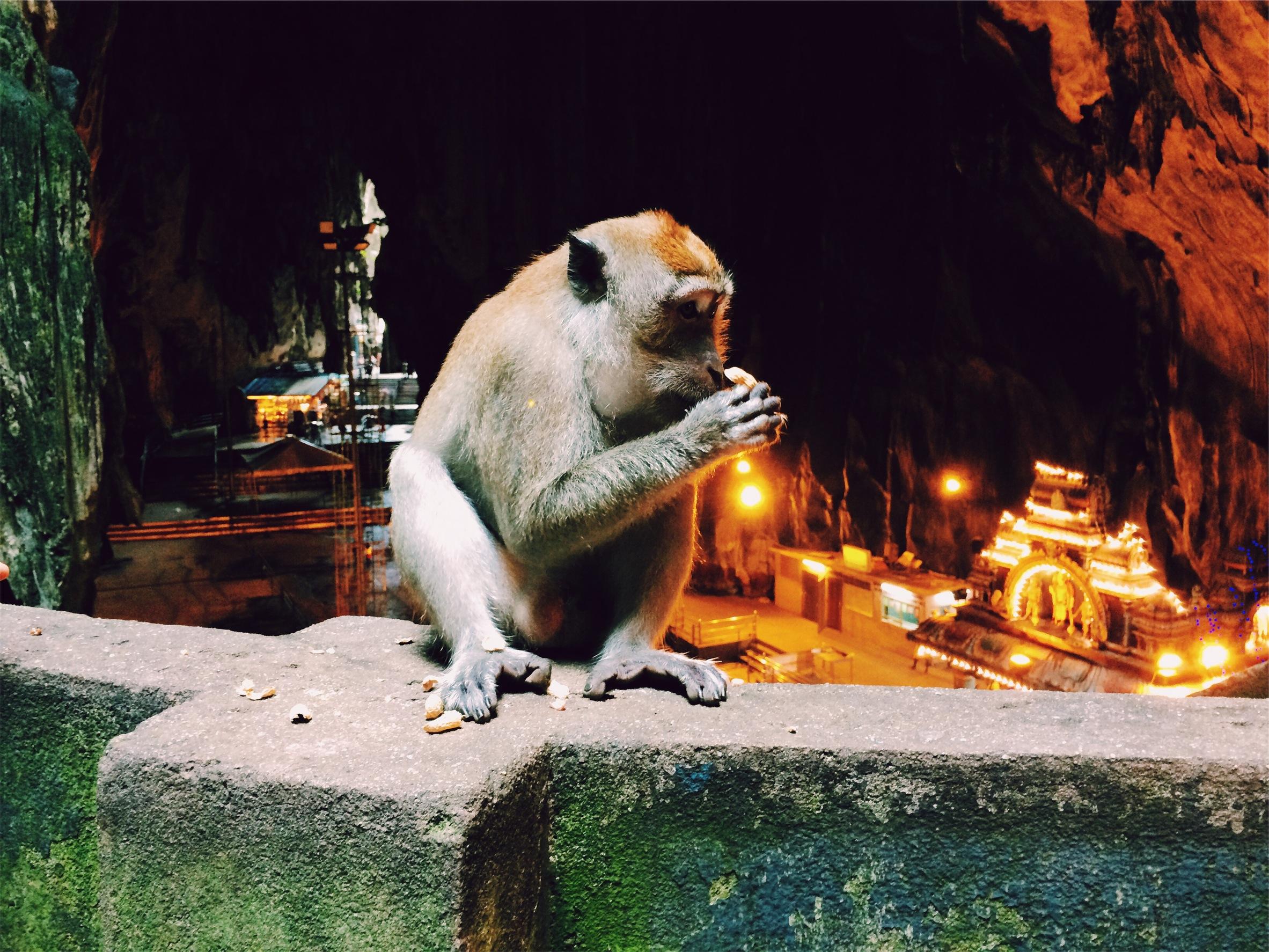 【相手がチンパンジーだと思うことにしよう】きっと本当は仲がいい夫婦の喧嘩10選