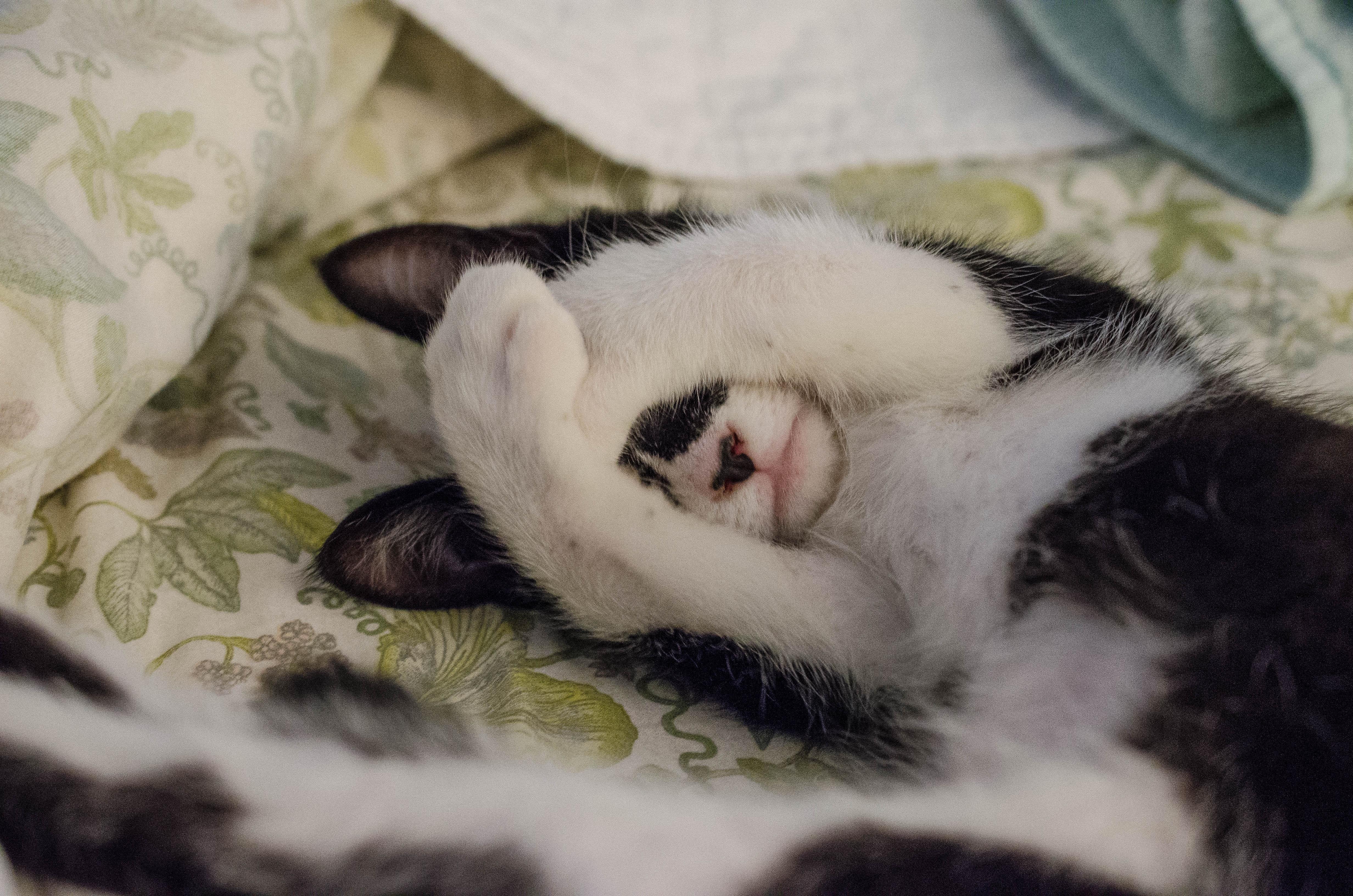 「もう諦めた」 ペットショップで売れ残った猫の愛情物語