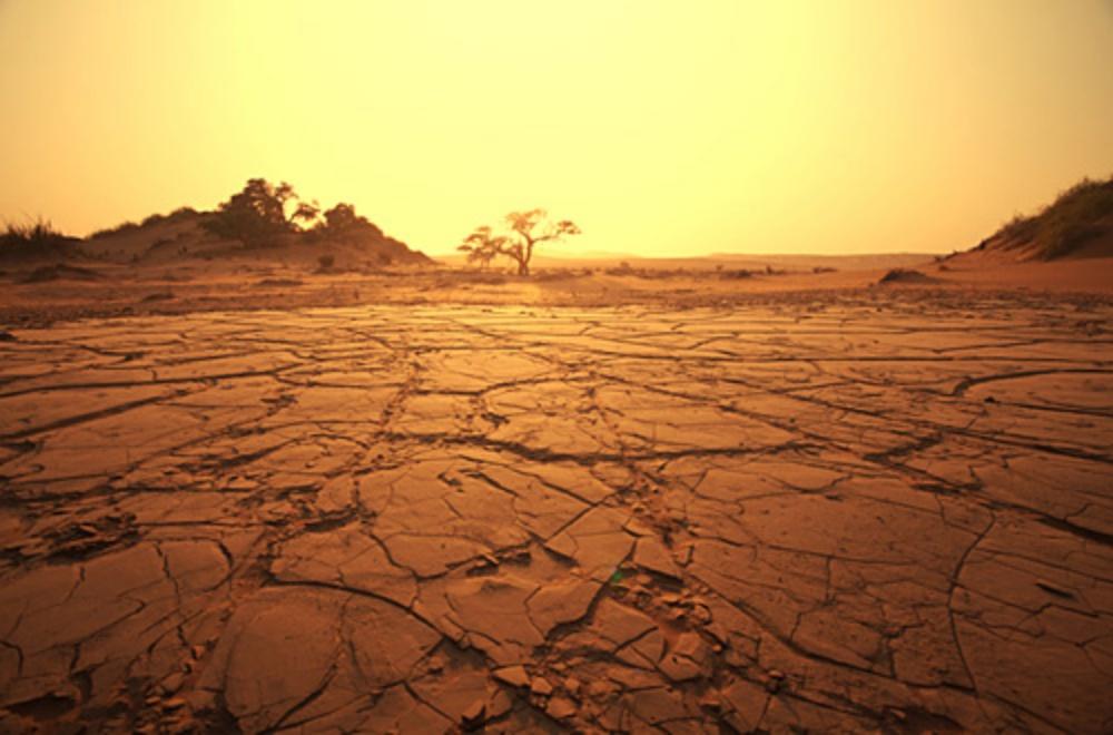 【※衝撃】人類が滅亡したら起こることTOP7!地球上を支配するであろう生物まで!