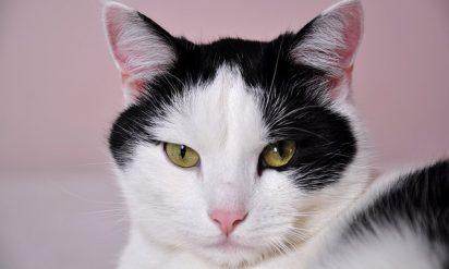 涙腺崩壊必至!売れ残りの成猫とオジサマの運命の出会い第11話『初めてのお留守番』