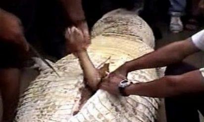 【閲覧注意】人間が巨大ヘビに丸呑みされる!!インドネシアの男性が被害に‥!!(※動画あり)