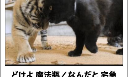 【爆笑】こんなの絶対に笑ってしまう!連続で吹き出す猫のボケて!TOP11