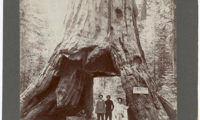 【驚愕】樹齢1000年の木に彼らは穴を開けた。130年後、悲しい事実を発見した‥