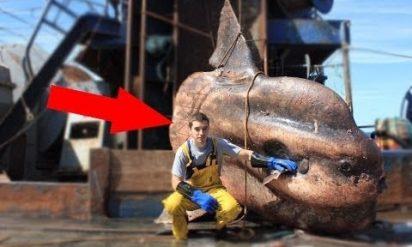 【衝撃】もっとも恐ろしい獲物を釣った漁師BEST8