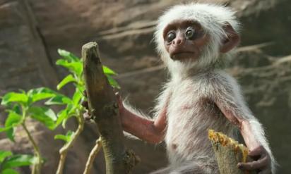 【衝撃】猿の群れに赤ん坊の人形を放置。動物たちが見せた反応に胸がつまる!!