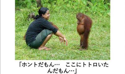【閲覧注意】あなたを呼吸困難にする動物のボケて11選