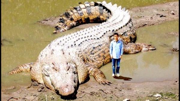 【60画像】実在した世界の仰天巨大動物・巨大生物の写真・高画質画像まとめ!