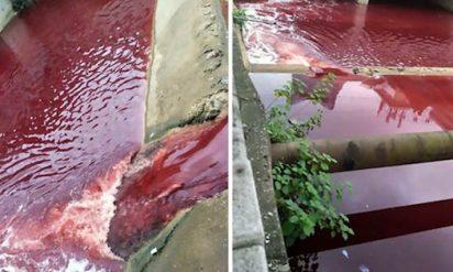 【衝撃】突然、本物の血液で真っ赤に染まった川‥その驚くべき原因に絶句‥