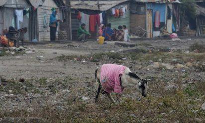 【衝撃】性犯罪が多いインドで、ヤギに集団で性的暴行という恐るべき事件が発生‥